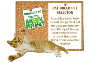 Cat Breed Selector